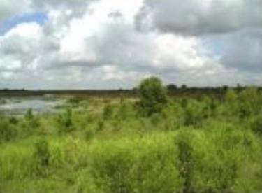 progress-energy-wetlands-plan-2